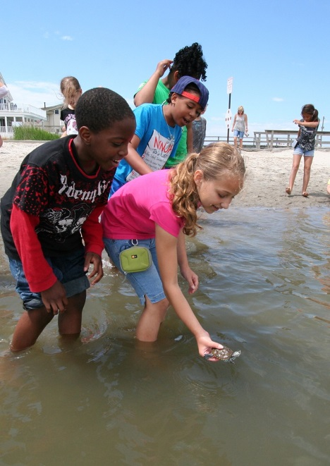 Fourth grade class releasing terrapins they adopted