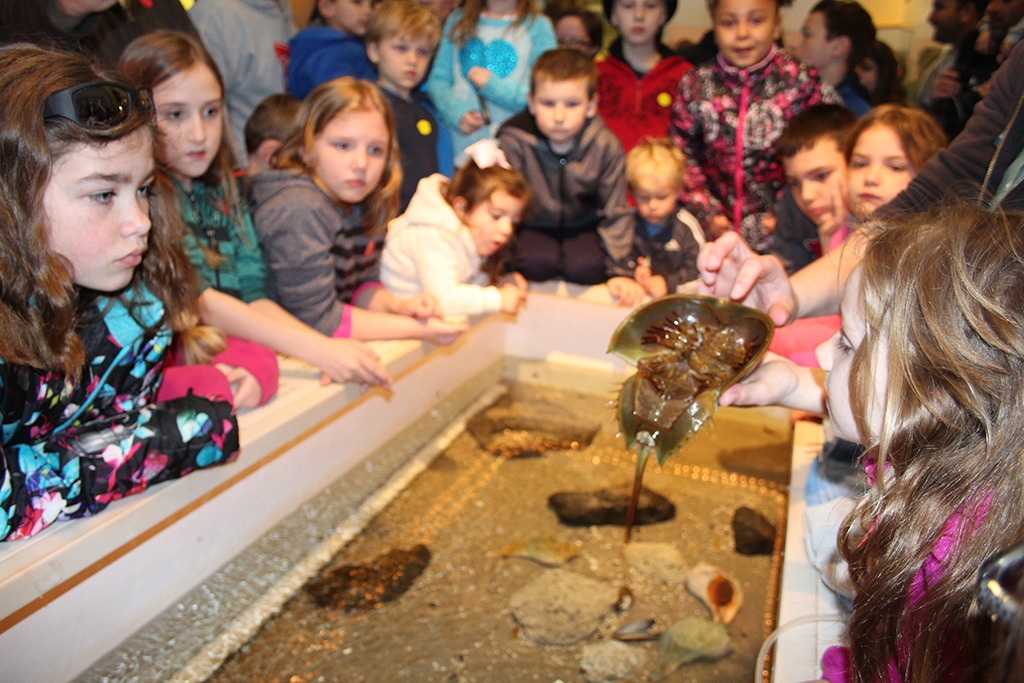 Teaching and Touch Tank