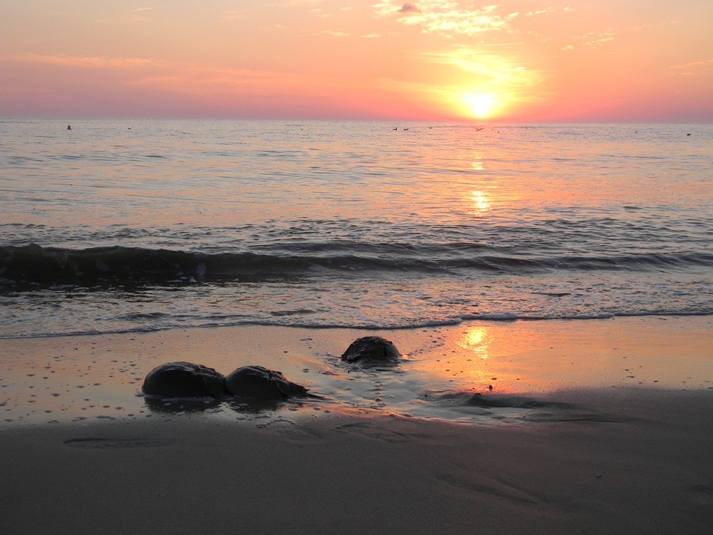Sunset on Delaware Bay during a horseshoe crab survey