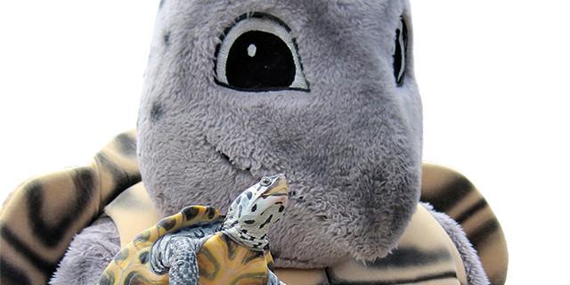 web-slider_turtle-fest-2