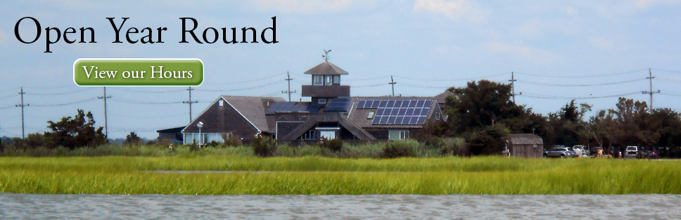 The Wetlands Institute is open year round! Click for more information.