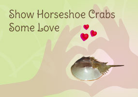 Horseshoe-Crab-support-feature