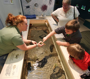 aquarium-teaching-touch-tank-wetlands-institute