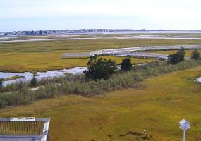 Wetlands Livecams