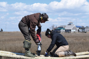 installing marsh elevation monitoring stations at The Wetlands Institute