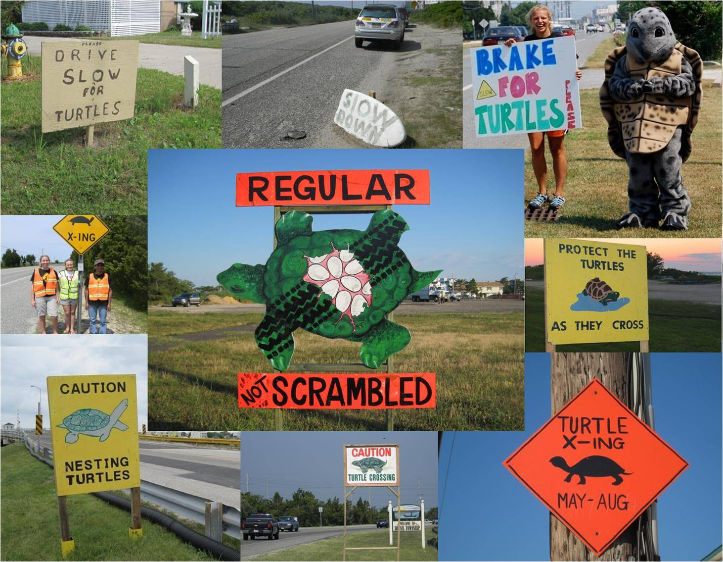 Brake for turtles signs