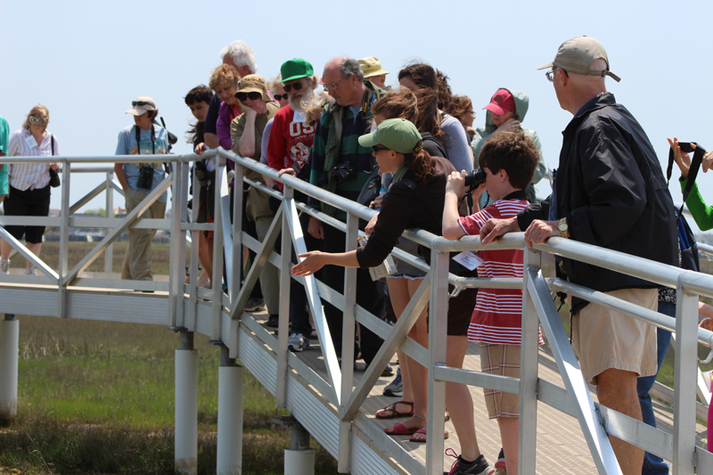 Crowd enjoys the view from our new elevated marsh walkway