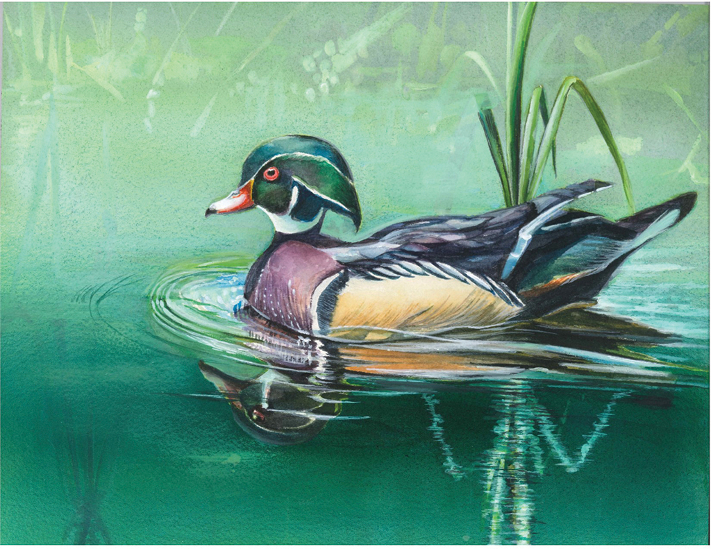 """Best of Show for New Jersey """"Wood Duck in Early Morning Fog"""", by Ashley Yae."""