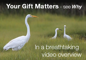 The Wetlands Institute video overview