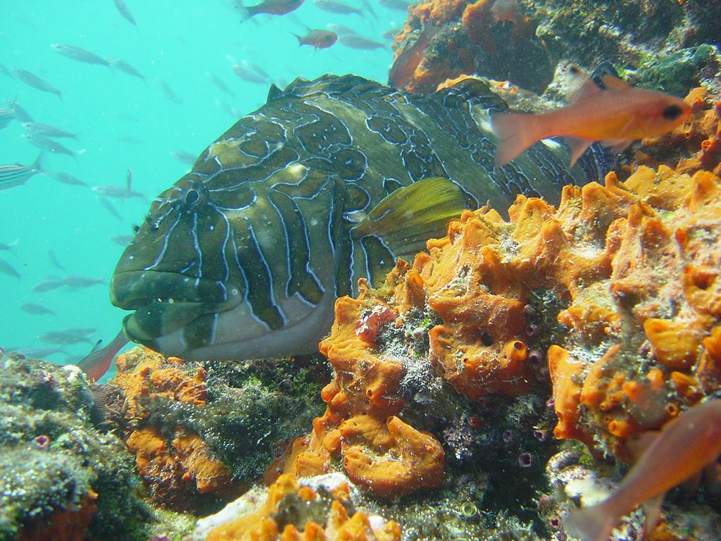 MT575 Fish3.HR.MT